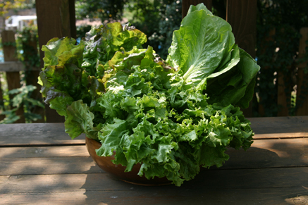 Bowl of Lettuce leaves