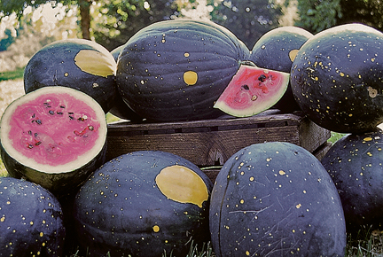 Watermelon - Moon Stars