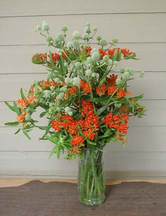 Rattlesnake master and Butterfly weed in a vase