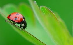 LadyBug - Natural Pest Control