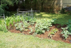 Home Kitchen Vegetable Garden